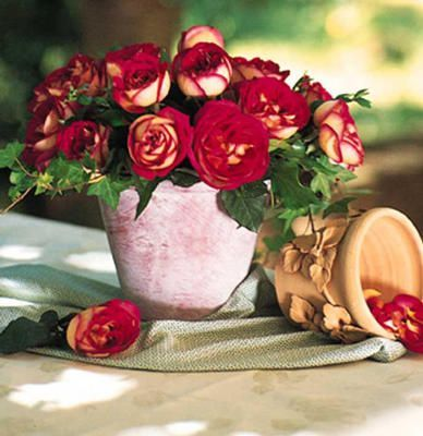roses BOLCHO-