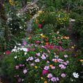 2009 08 08 La partie gauche de mes fleurs annuelles