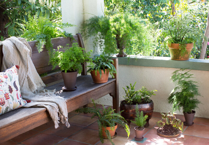 ferns-houseplants-porch-bench-mimi-giboin-1536x1066
