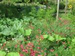 Jardin-de-Felix-Profusion-800x600_visuel_resume