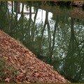 Miroir de peupliers à l'automne