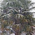 Etoile des neigeuuuuuuuuuuuu......