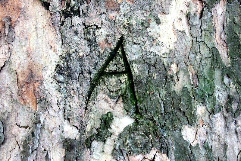 5-A (gravure arbre)_2197
