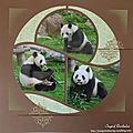 Panda de beauval en eclipse1