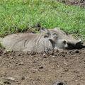 2010-03-09 Ngorongoro (258)