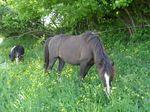 poneys_170511_002