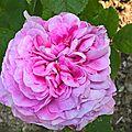 belle virginie (jardin)