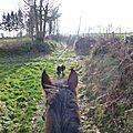 Balade à cheval dans la forêt P1080266