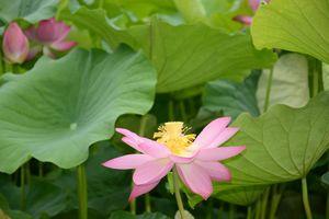 3 juillet Takamatsu Ritsurin 115