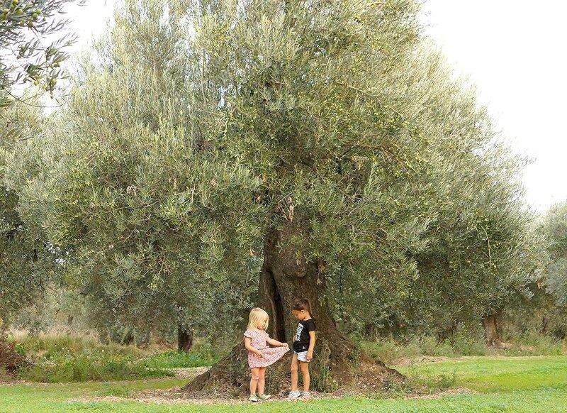 cerise et louise oliviers