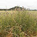 Balade - - 2014-06-28 - P6286230