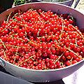 Gelée de groseilles rouges !