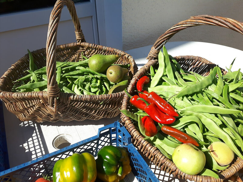 haricots, piments