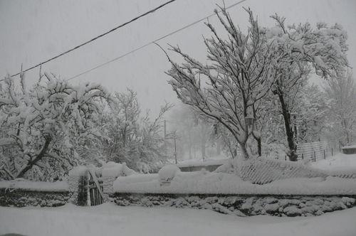 2008 12 14 Neige qui viens de tombé