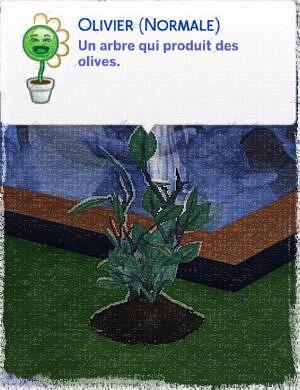 olive jeune