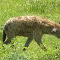 2010-03-09 Ngorongoro (243)