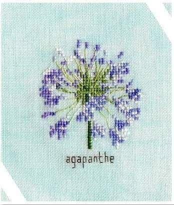 ''Agapanthe'' ( Orbispictura)
