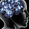 L'activité cognitive des centres corticaux du