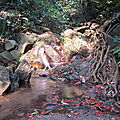 Trekking - Chiang Mai 8