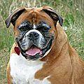 Mon chien est trop gros . oups !!!