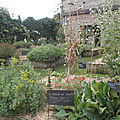 botanique_mlle aubergine