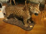 Brésil au musée zoologique de Strasbourg