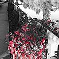Le rouge et le noir au quai d'auchel à rennes le 5 octobre 2014 (4)