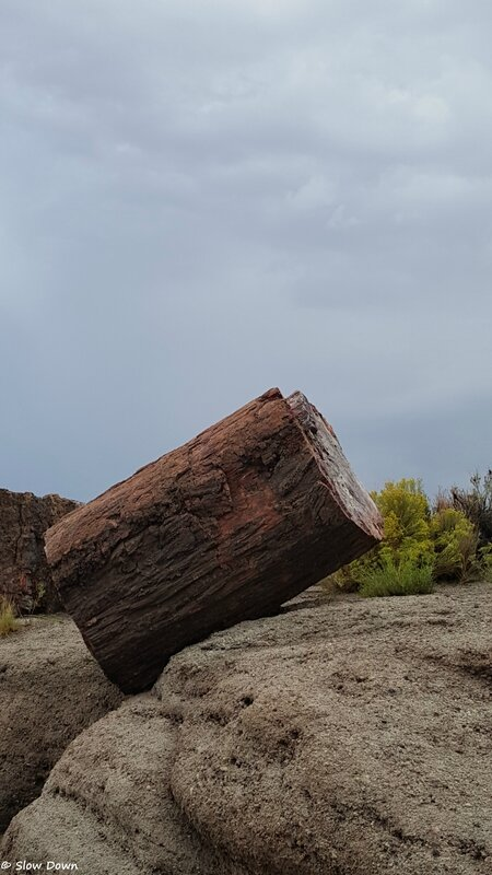 Petrified forest 6
