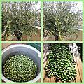 Mes olives
