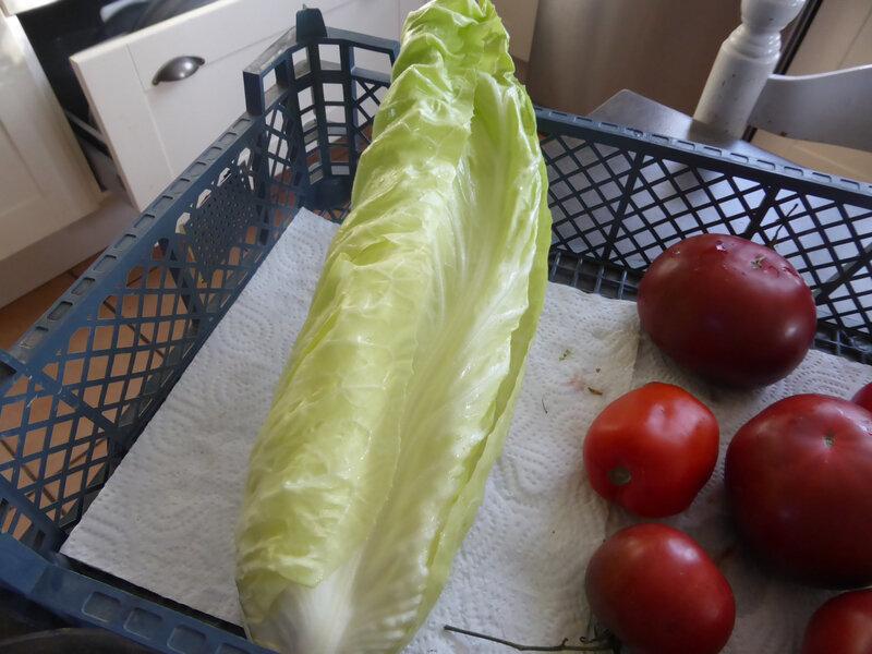 11-salade pain de sucre, tomates