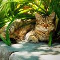 Les chats (125)