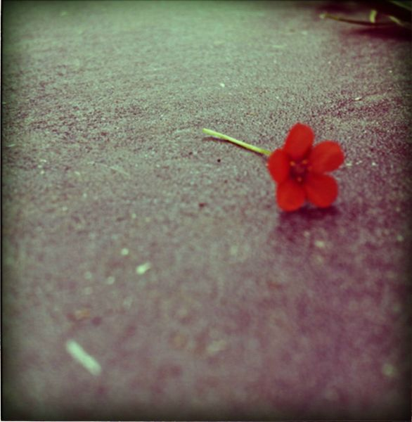 little flower red