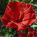 Focus stacking fleur d'hibiscus 2