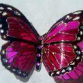 2010_0806papillons-06aout-100008