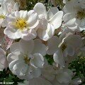 Sourire d'Orchidée au jardin de l'Évêché à Blois