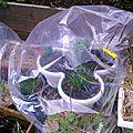 Herbes aromatiques mars 2014
