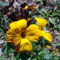Du jaune dans notre jardin