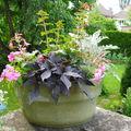 Potées fleuries à l'ombre