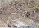 La saônelle - barrage de déchets
