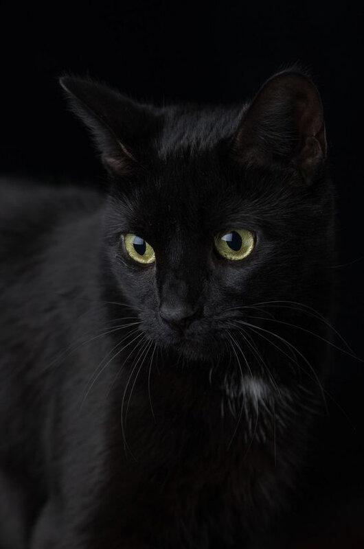 chat noir_4