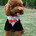 - 50 % costume de cérémonie pour chien mâle taille xs (réf rch-male)