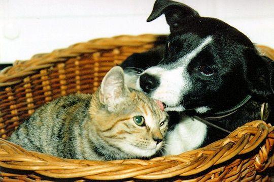 chien et chat corbeille-235357