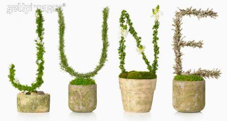 June_plantes