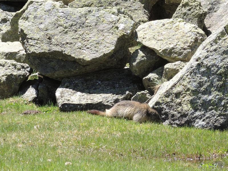 E) Vallée des Oulettes de Gaube, plateau et marmotte