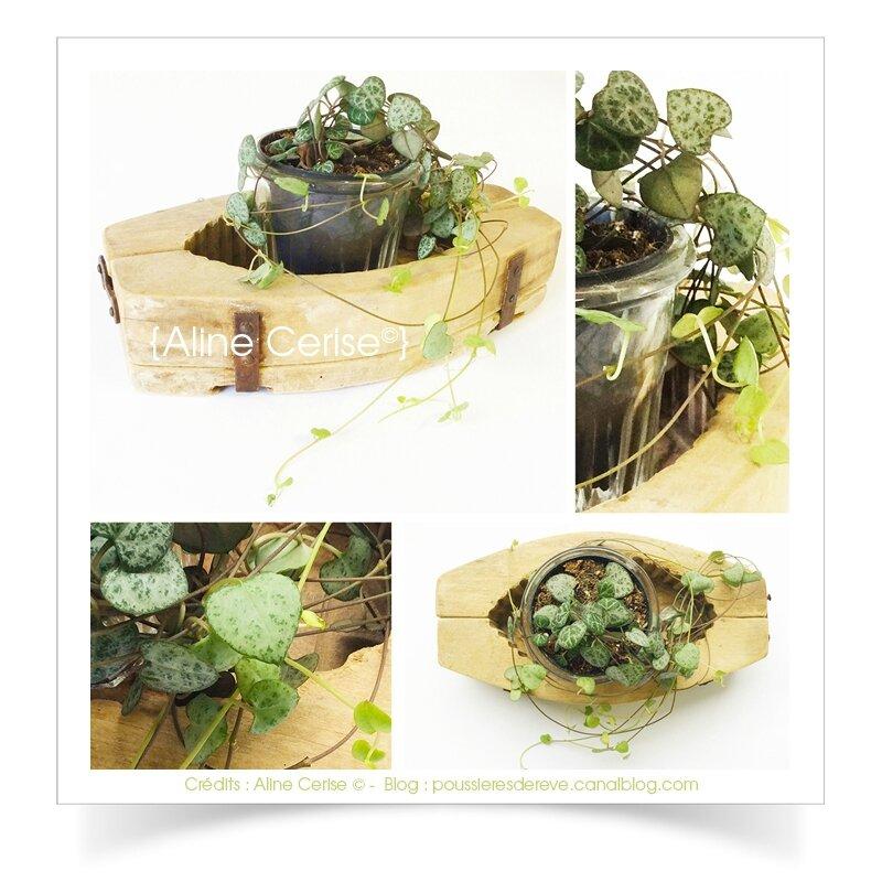 plante1A