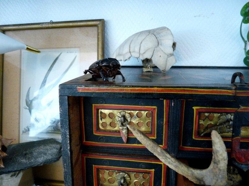 cabinet curiosité 03