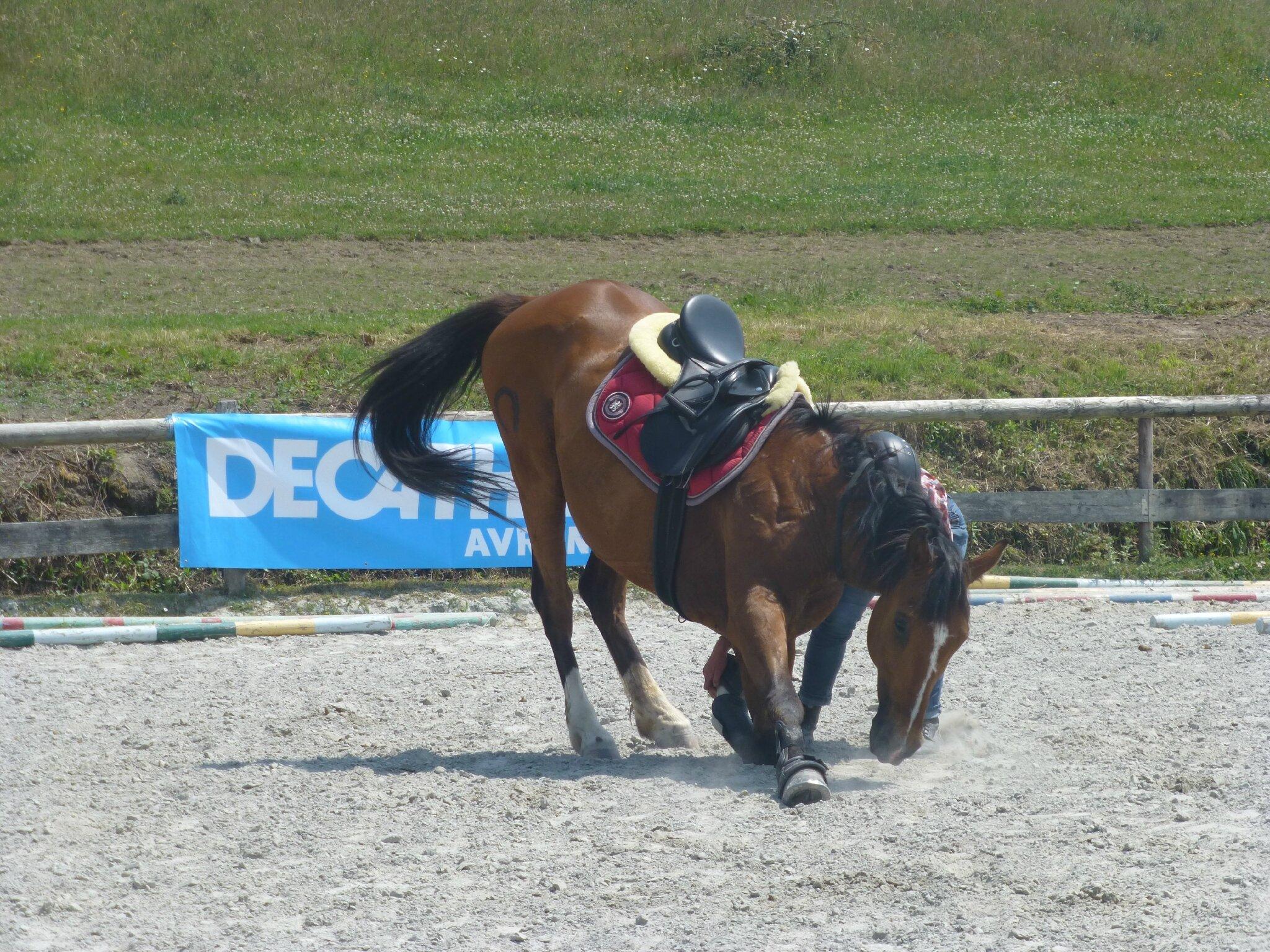 Jeux équestres manchots 2013 (158)