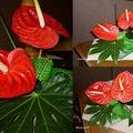 Anthuriums rouges