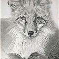 196 - renard