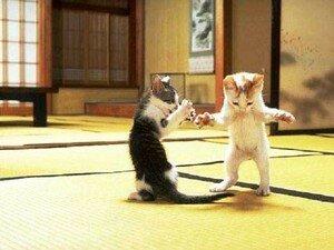 Cat_Fight_1_